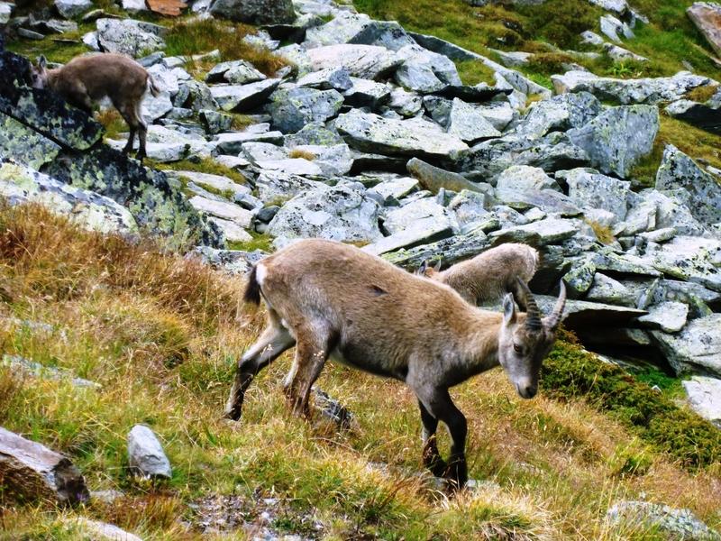 Klettersteig Wallis : Alpenstieg ihr bergtourenexperte
